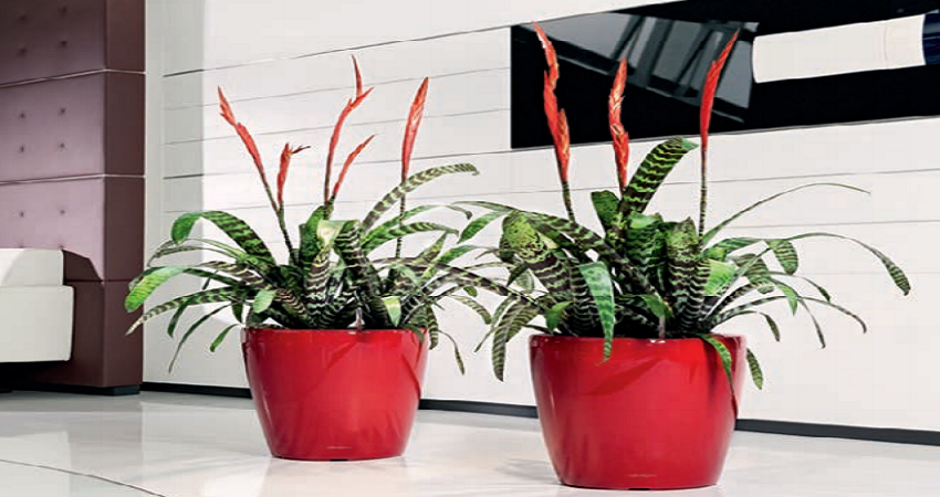 office plant displays. Simple Office Plant Displays And Plants For Office