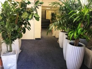 plants lining the corridor in an office